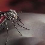 Yeni Video: Yeah Yeah Yeahs – Mosquito